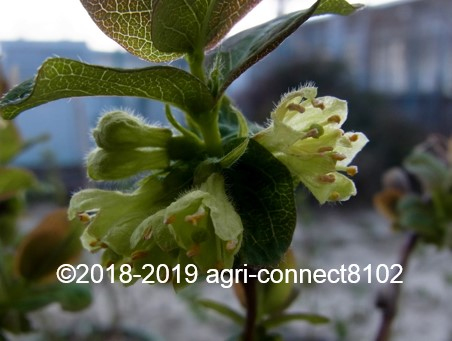 f:id:agri-connect:20190405223729j:plain