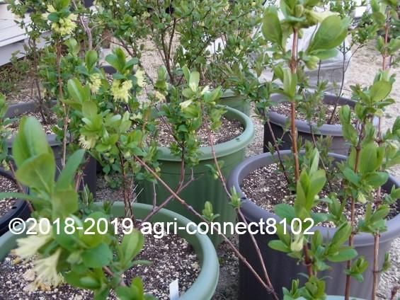 f:id:agri-connect:20190410215402j:plain