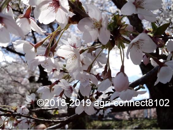 f:id:agri-connect:20190419212326j:plain