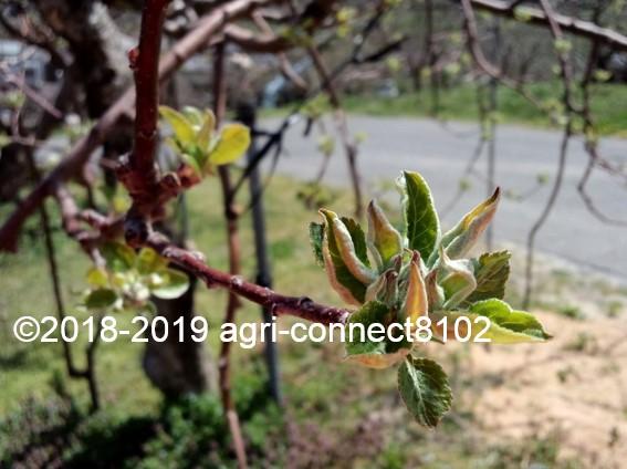 f:id:agri-connect:20190419212427j:plain