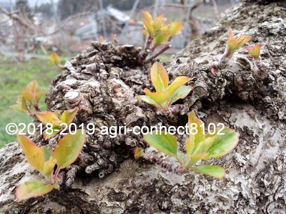 f:id:agri-connect:20190419212445j:plain