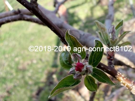f:id:agri-connect:20190419215710j:plain