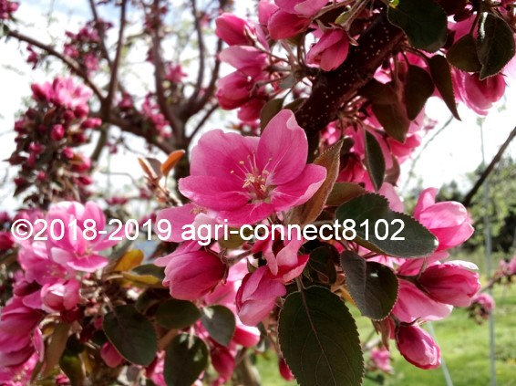 f:id:agri-connect:20190428205132j:plain