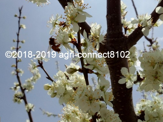 f:id:agri-connect:20190428205945j:plain