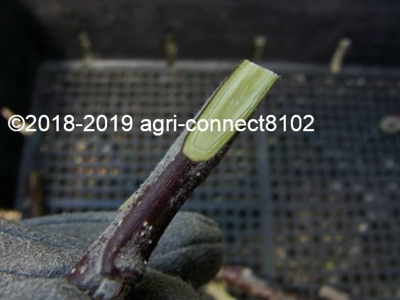 f:id:agri-connect:20190503212054j:plain