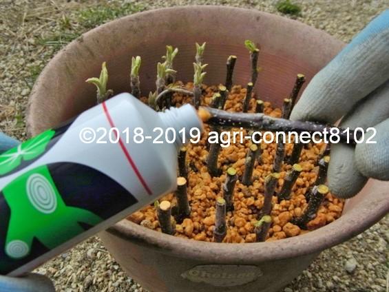 f:id:agri-connect:20190503215339j:plain
