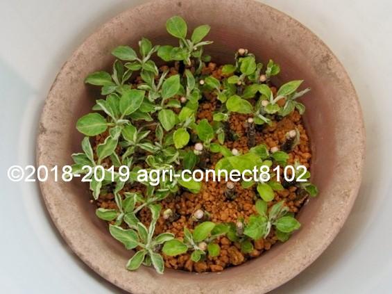 f:id:agri-connect:20190503225034j:plain