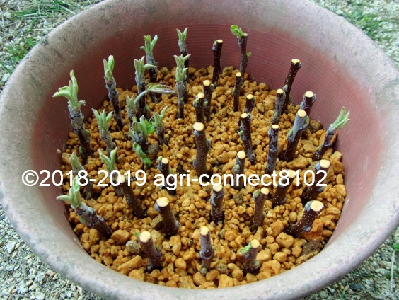 f:id:agri-connect:20190503234718j:plain
