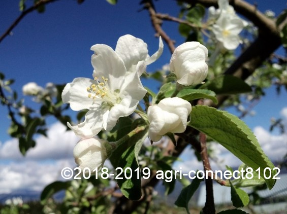 f:id:agri-connect:20190504213755j:plain