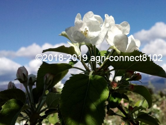 f:id:agri-connect:20190504213808j:plain