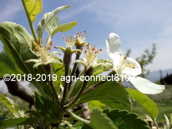 f:id:agri-connect:20190504214834j:plain