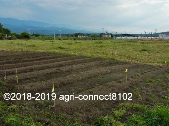 f:id:agri-connect:20190514214137j:plain