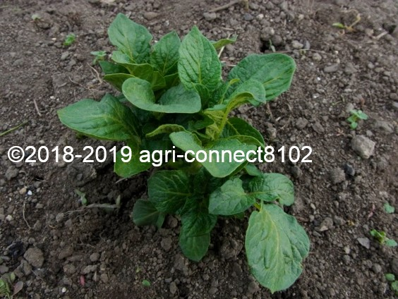f:id:agri-connect:20190514214219j:plain