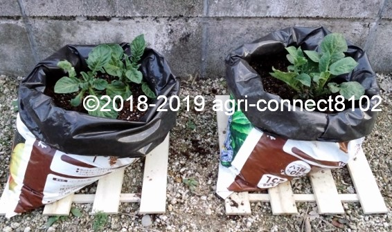 f:id:agri-connect:20190514214250j:plain
