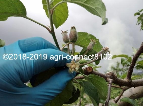 f:id:agri-connect:20190518204954j:plain