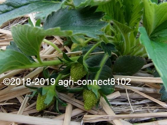 f:id:agri-connect:20190519211519j:plain