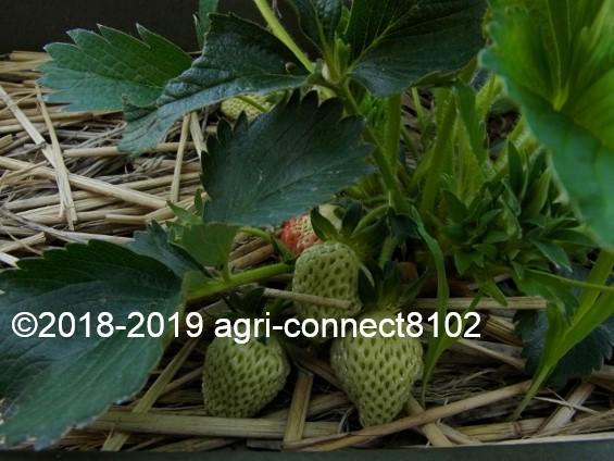 f:id:agri-connect:20190519211757j:plain