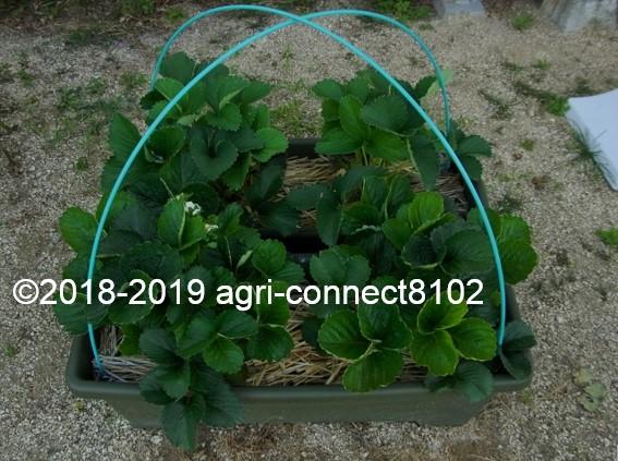 f:id:agri-connect:20190521094606j:plain