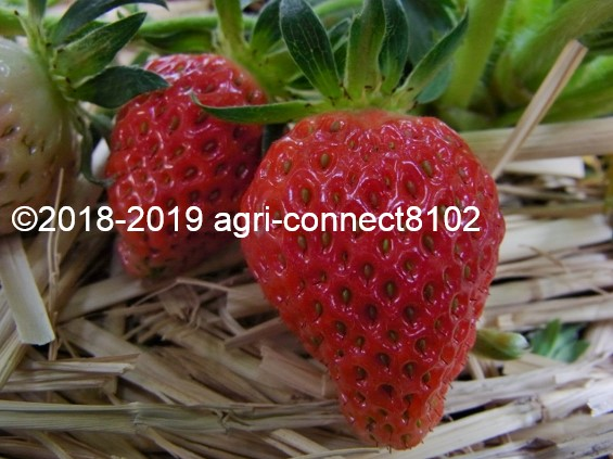 f:id:agri-connect:20190521205016j:plain
