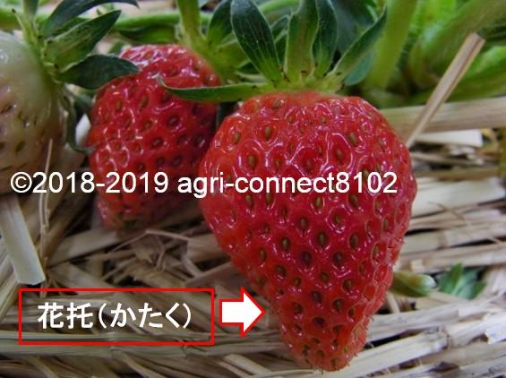 f:id:agri-connect:20190521210053j:plain
