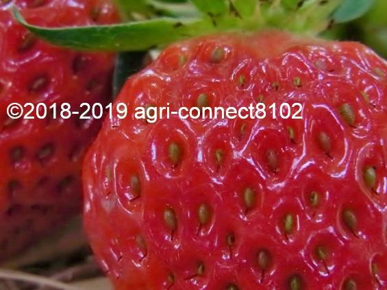 f:id:agri-connect:20190521211256j:plain