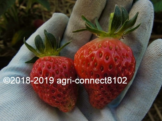 f:id:agri-connect:20190522212544j:plain