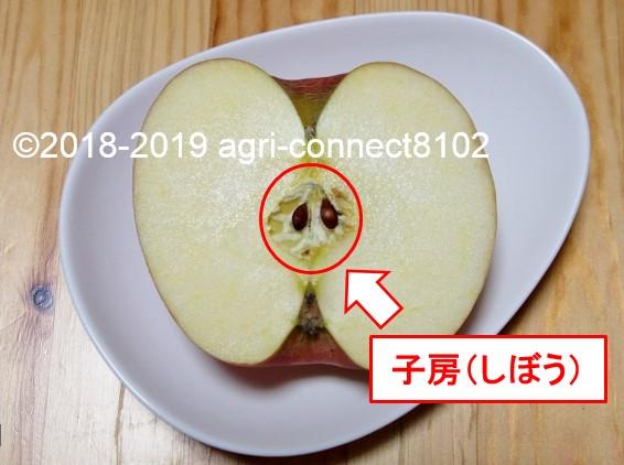 f:id:agri-connect:20190522220342j:plain