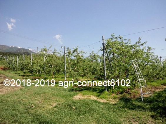 f:id:agri-connect:20190526232957j:plain