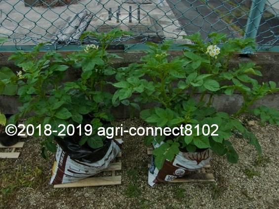 f:id:agri-connect:20190609224653j:plain