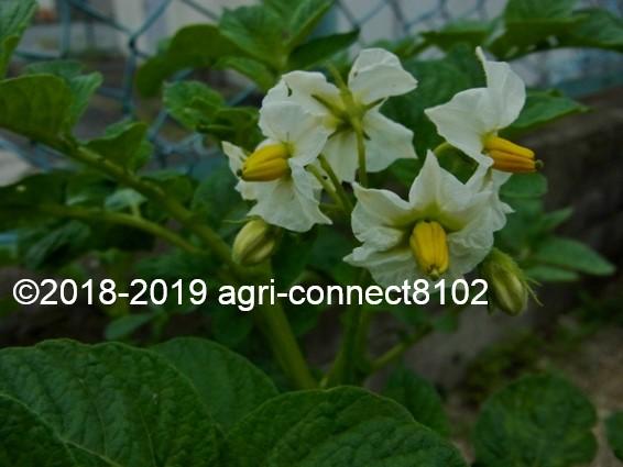 f:id:agri-connect:20190609224701j:plain