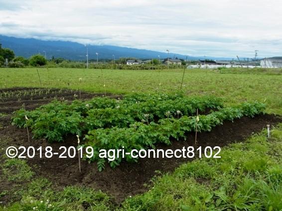 f:id:agri-connect:20190610132502j:plain