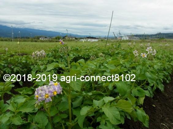 f:id:agri-connect:20190610132510j:plain