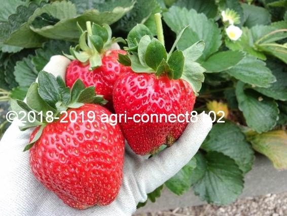 f:id:agri-connect:20190616215737j:plain