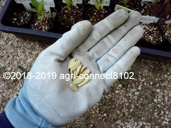 f:id:agri-connect:20190619215357j:plain