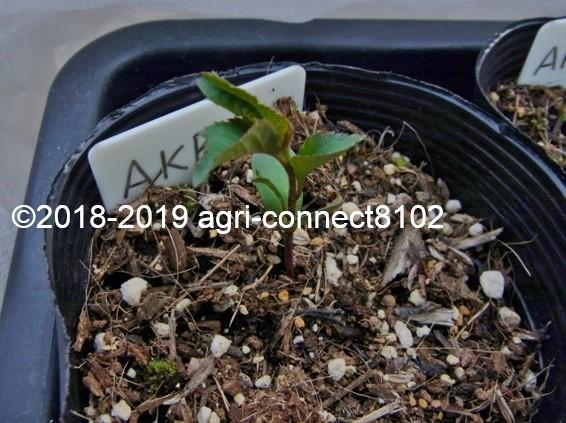f:id:agri-connect:20190620223751j:plain