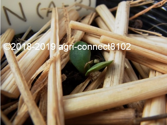 f:id:agri-connect:20190620225213j:plain