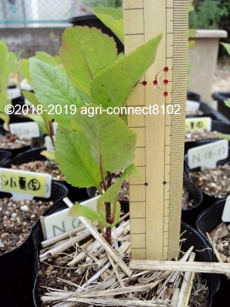 f:id:agri-connect:20190621210522j:plain