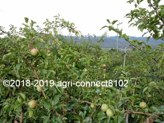 f:id:agri-connect:20190706223847j:plain