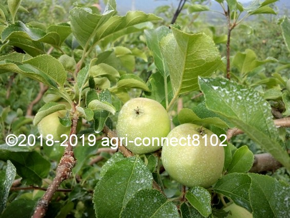 f:id:agri-connect:20190706223900j:plain