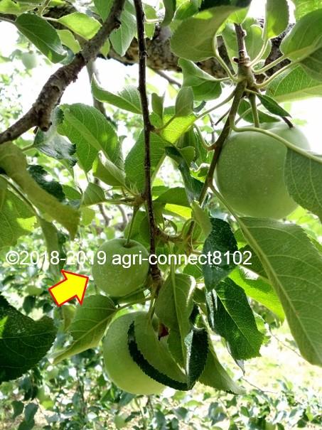 f:id:agri-connect:20190707220359j:plain