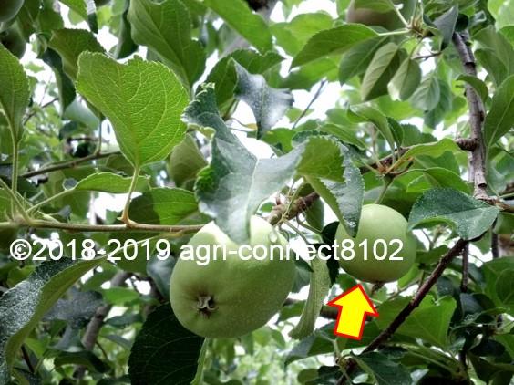 f:id:agri-connect:20190707220412j:plain