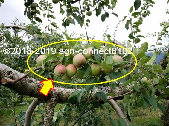 f:id:agri-connect:20190707221124j:plain