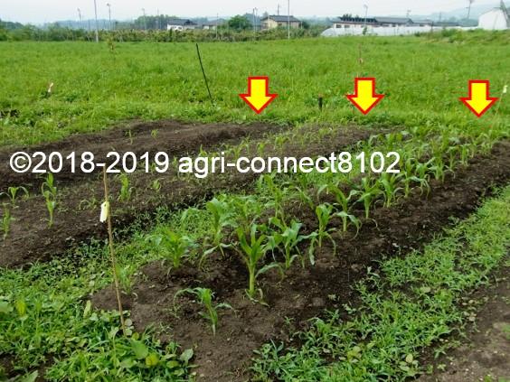 f:id:agri-connect:20190711164109j:plain