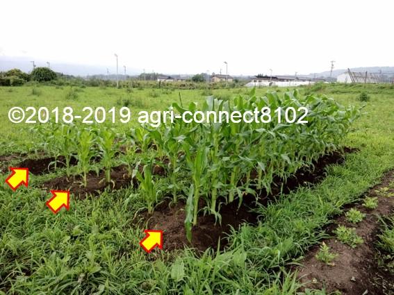 f:id:agri-connect:20190711164228j:plain