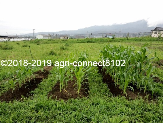 f:id:agri-connect:20190711172149j:plain