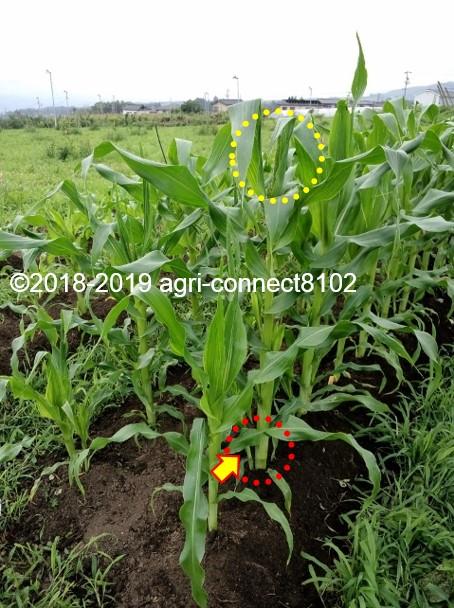 f:id:agri-connect:20190711174202j:plain