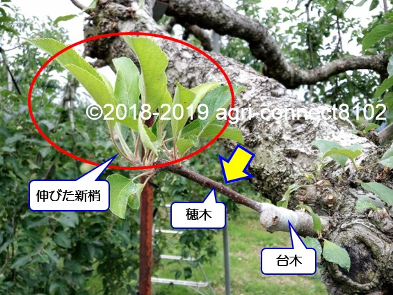f:id:agri-connect:20190718225217j:plain