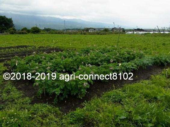 f:id:agri-connect:20190722222210j:plain