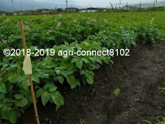 f:id:agri-connect:20190722222330j:plain