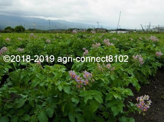 f:id:agri-connect:20190722222340j:plain
